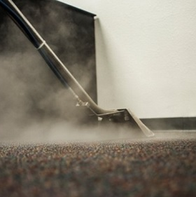 Does Steam Cleaning Kill Fleas and Their Eggs?