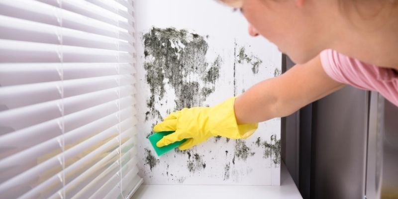 Woman with gloves removing mold from wall