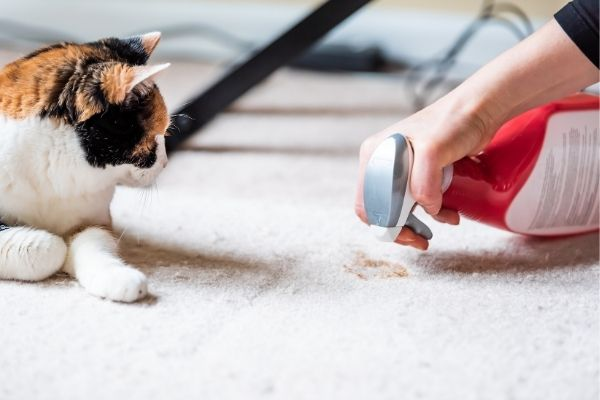 Woman cleaning pet stain on carpet while cat is looking