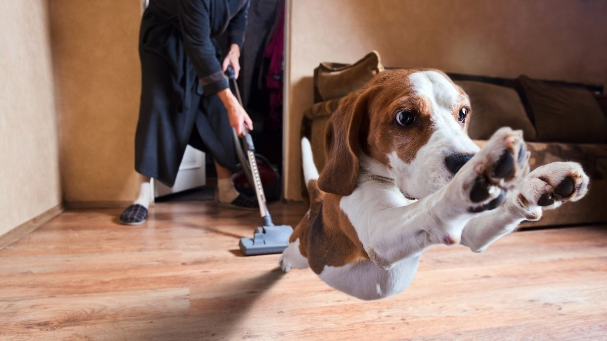 Best Steam Cleaner for Pets