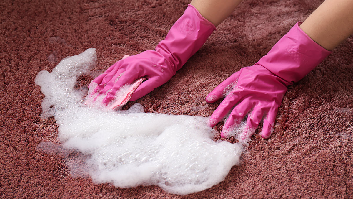 Woman wearing pink gloves cleaning carpet with shampoo