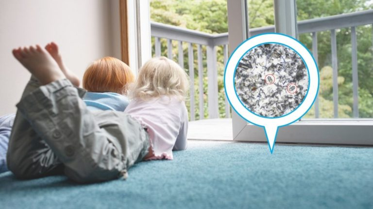 Does Steam Cleaning Kill Dust Mites? [What You Need To Know About House Dust Mites]