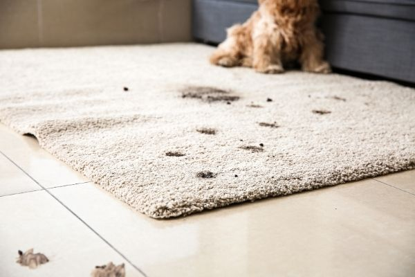 best way to pretreat carpet before steam cleaning