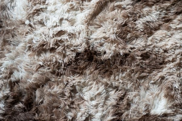 can steam cleaning carpet cause mold