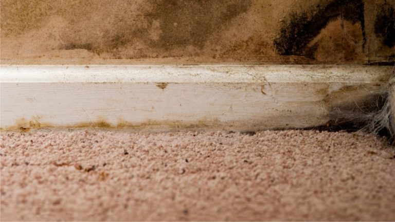 Can Steam Cleaning Carpet Cause Mold (3 Easy Steps to Avoid It)